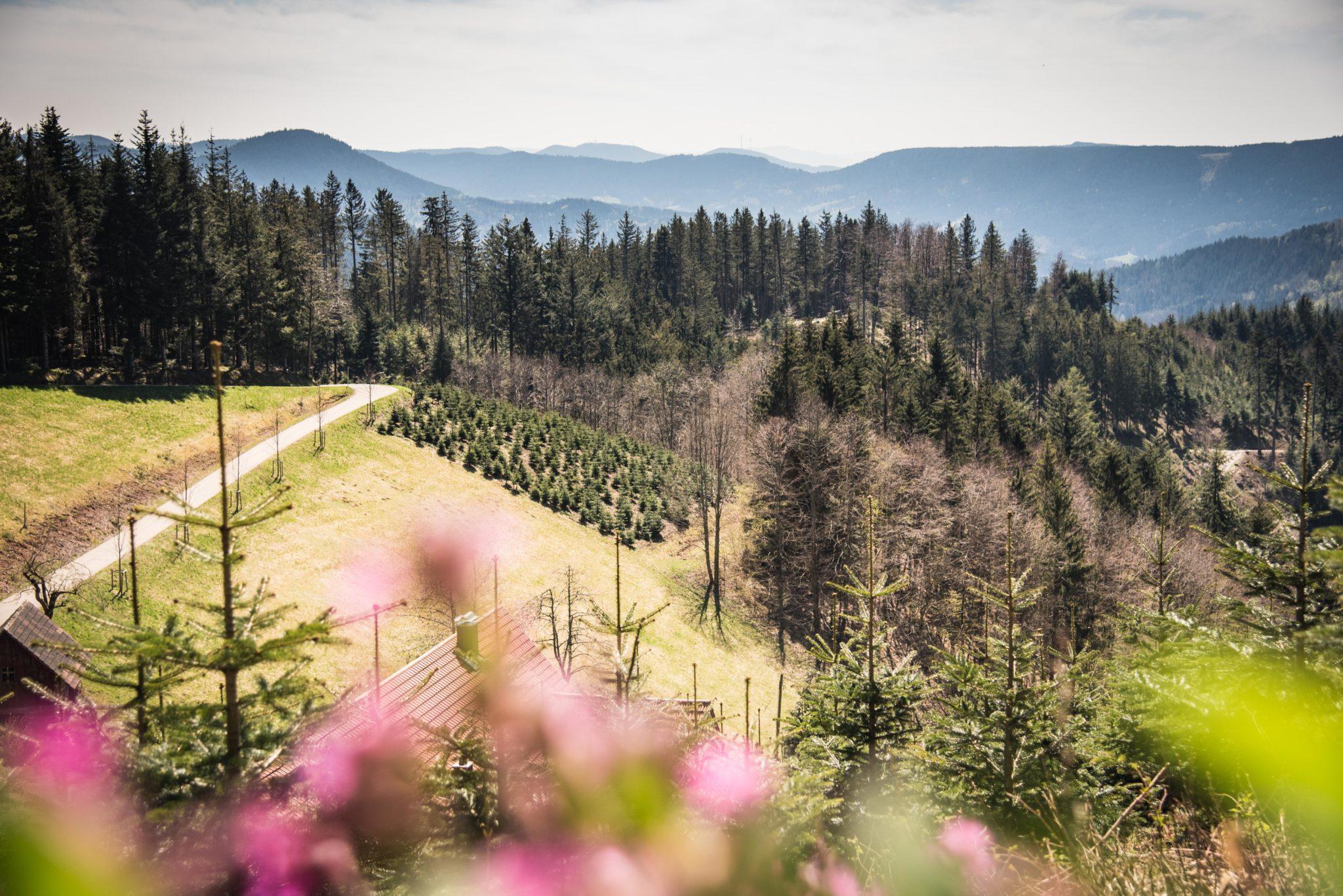 Das Bild zeigt eine wunderbare Schwarzwaldaussicht und steht für Neuanfang.